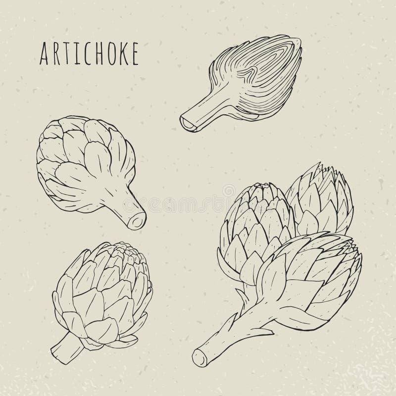 Lokalisierte der Artischocke gesetzte Hand gezeichnete botanische und Anlage im Schnitt Dieses ist Datei des Formats EPS8 vektor abbildung