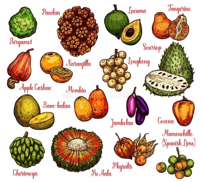 Lokalisierte exotische Früchte, Vektorskizze stock abbildung
