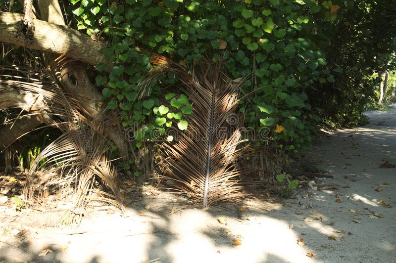 Lokalisierte getrocknete Palmenniederlassung stockfotografie