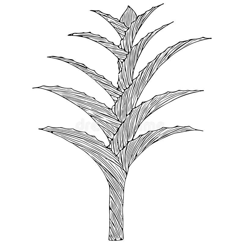 Lokalisierte Handgezogenes Aloe Vera oder -aloe barbadensis Mühle, Sternkaktus, Aloin, Jafferabad, Barbados auf schwarzem Hinterg stock abbildung