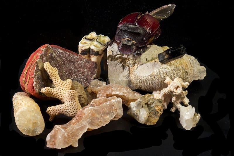 Lokalisierte Mineralien, Fossilien und tropischer enormer Käfer lizenzfreie stockfotografie