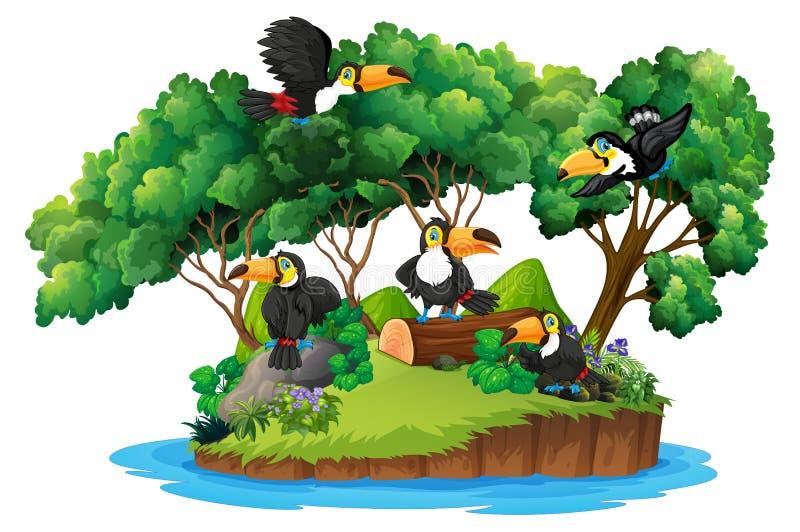 Lokalisierte Naturinsel mit Tukan stock abbildung
