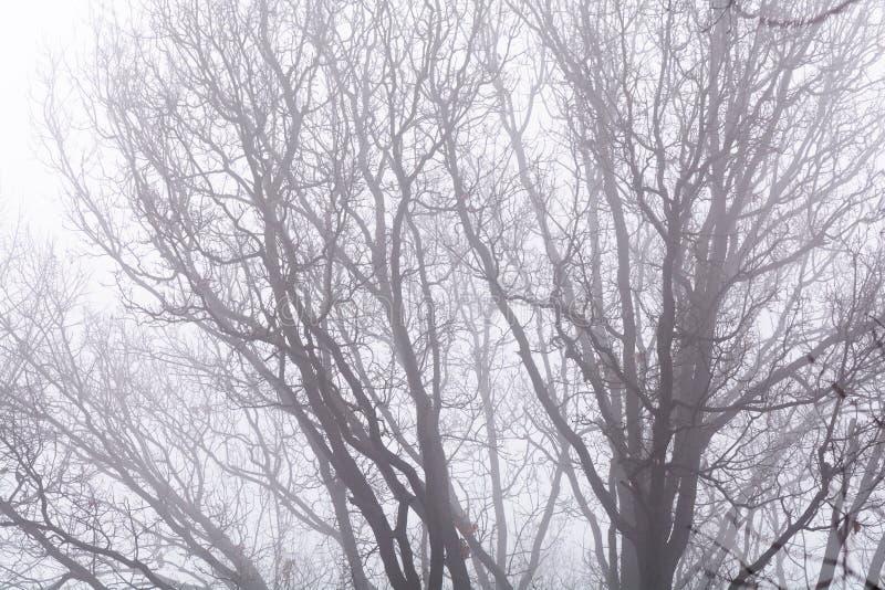 Lokalisierte Niederlassungen über weißem Himmel Schwarze bloße Baumaste auf wh lizenzfreies stockfoto