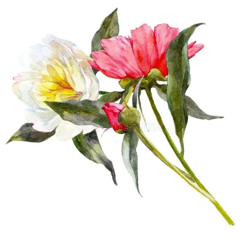 Lokalisierter Aquarellblumenstrauß von weißen und rosa Pfingstrosen mit Blättern vektor abbildung