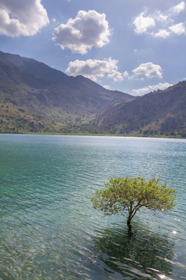 Lokalisierter Baum im Süßwassersee zwischen Bergen stockbild