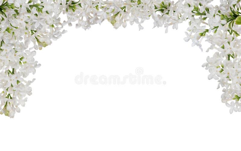 Lokalisierter halber Rahmen der weißen lila Blume lizenzfreies stockfoto