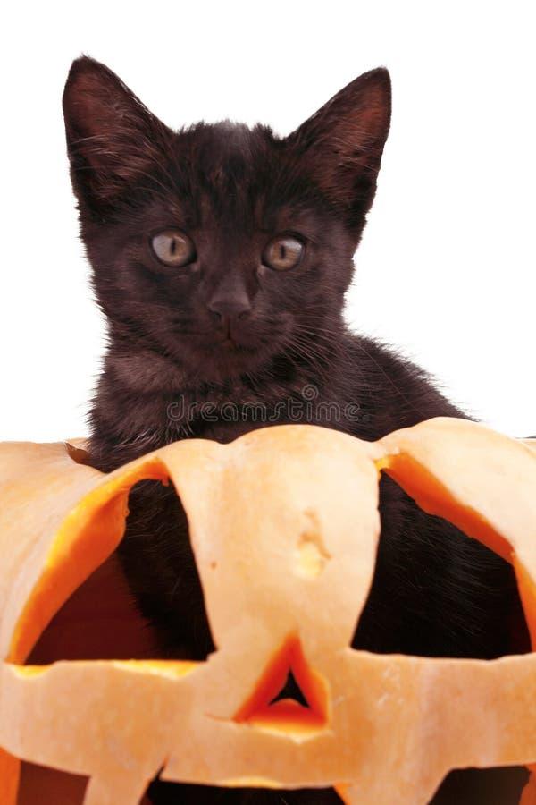 Lokalisierter Halloween-Kürbis und schwarze Katze lizenzfreie stockbilder
