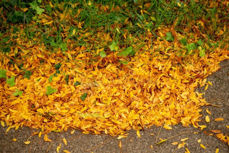Lokalisierter Herbstlaub aufgrund von Parkplatz stockbild