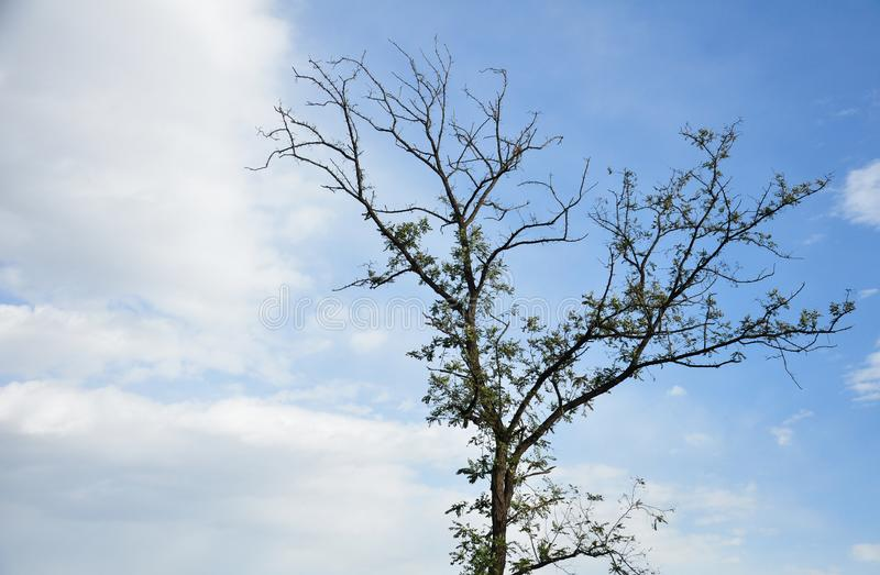 Lokalisierter Hintergrund des blauen Himmels des Herbstes Baum stockbilder
