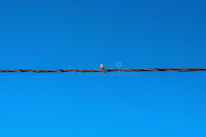 Lokalisierter Schwarzweiss-Vogel auf Metalldraht im blauen Himmel lizenzfreies stockbild