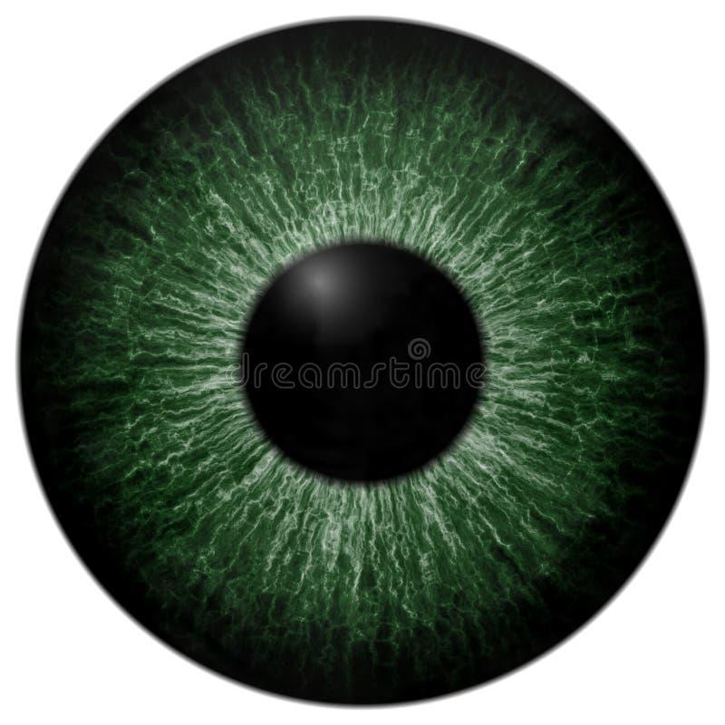Lokalisierter weißer Hintergrund des Augapfels grüne Farbbeschaffenheit stockfoto