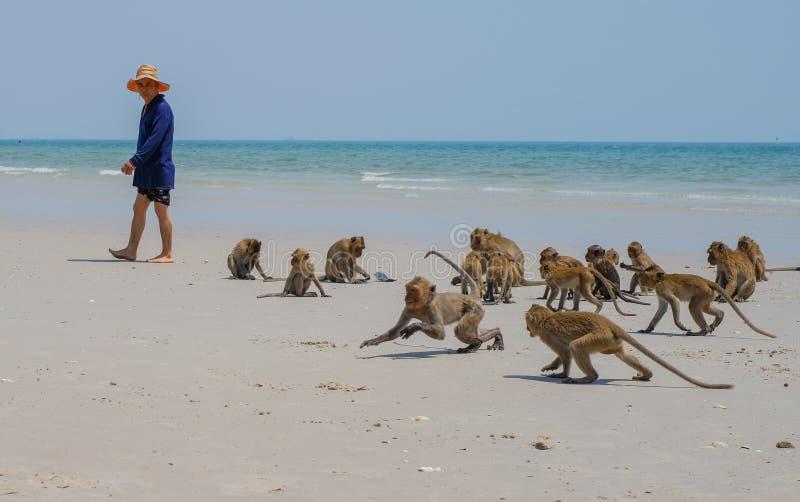 Lokalna dzika małpy sztuki Hua Hin plaża Tajlandia fotografia royalty free