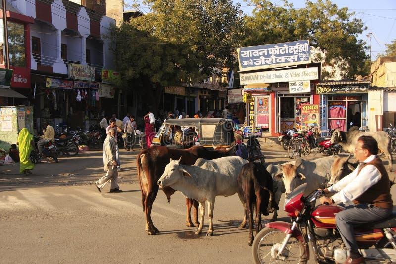 Lokalni ludzie i dzikie krowy na ulicie Bundi, India obrazy stock