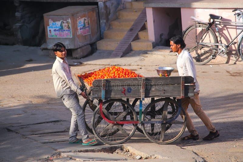 Lokalni mężczyzna pcha furę z pomidorami w Jaipur, Rajasthan, India zdjęcie royalty free