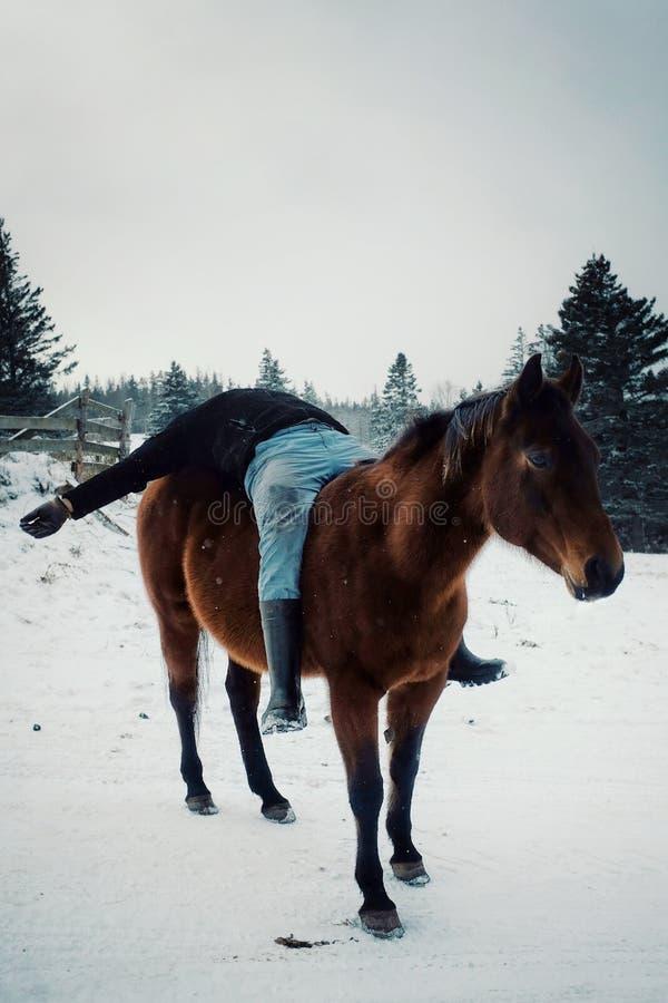 lokalny średniorolny mężczyzna ma zabawę i kłaść w dół na jego koniu outside podczas zimy w śniegu zdjęcie royalty free