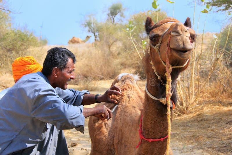 Lokalny przewdonik przygotowywa jego wielbłąda podczas safari, Thar pustynia, India fotografia royalty free