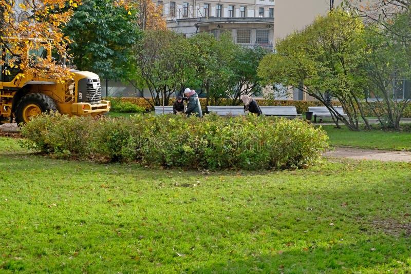 Lokalvård av sidor i parkera royaltyfri bild