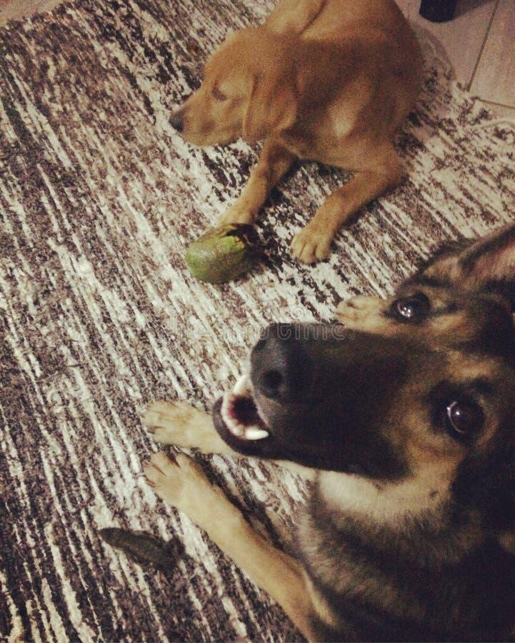 Lola und Malu stockbild