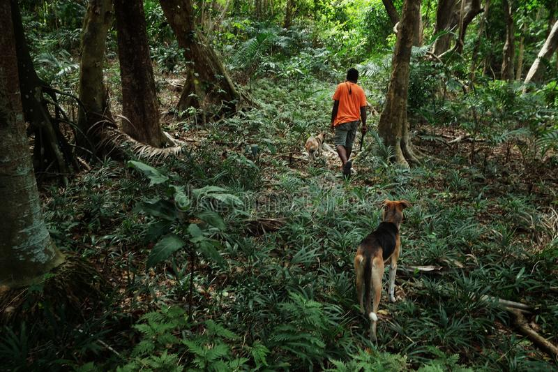 Young local village tribe member man teenager walking with his dogs to the rainforest jungle to hunt some birds with his slingshot. Lolits village, Espiritu royalty free stock images