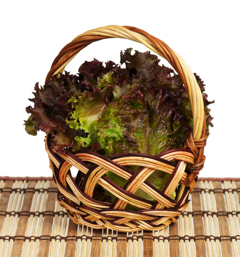 Lollo Rosso Lettuce Stock Images