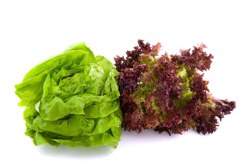 lollo rosso und butterhead salat lizenzfreies stockfoto. Black Bedroom Furniture Sets. Home Design Ideas