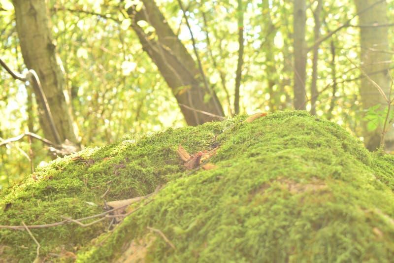 Loma herbosa en el bosque imagen de archivo