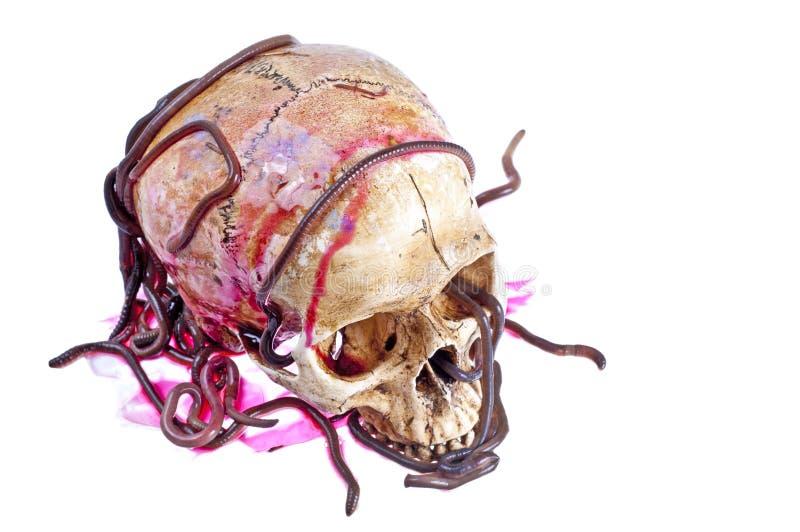 Lombrices de tierra en el cráneo foto de archivo libre de regalías