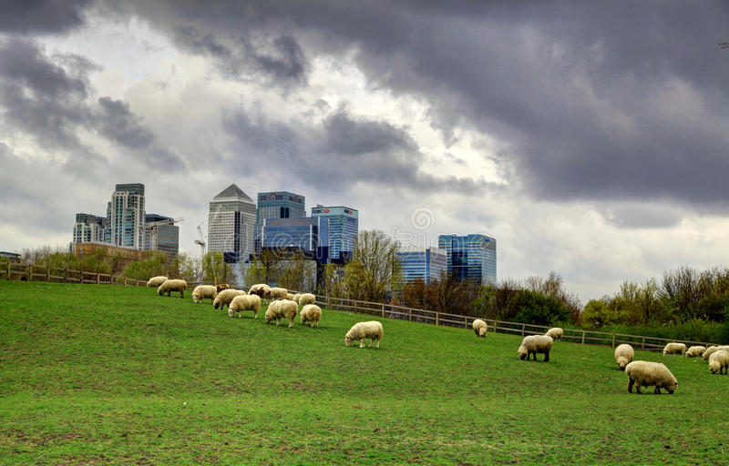 LONDEN, het UK - 29 MAART, de mening van Canary Wharf van 2014 van het lokale landbouwbedrijf royalty-vrije stock afbeeldingen