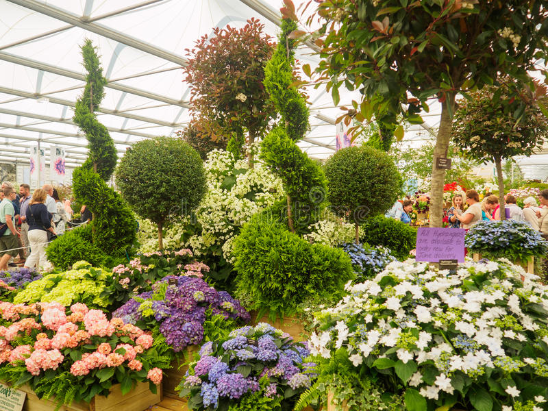 LONDEN, HET UK - 25 MEI, 2017: RHS Chelsea Flower Show 2017 stock foto