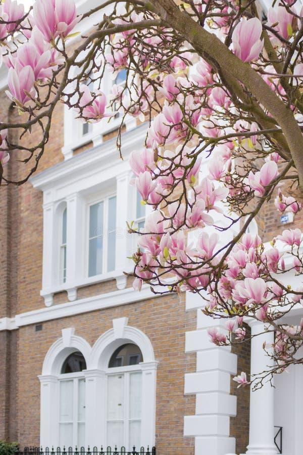 London in bloom stock image