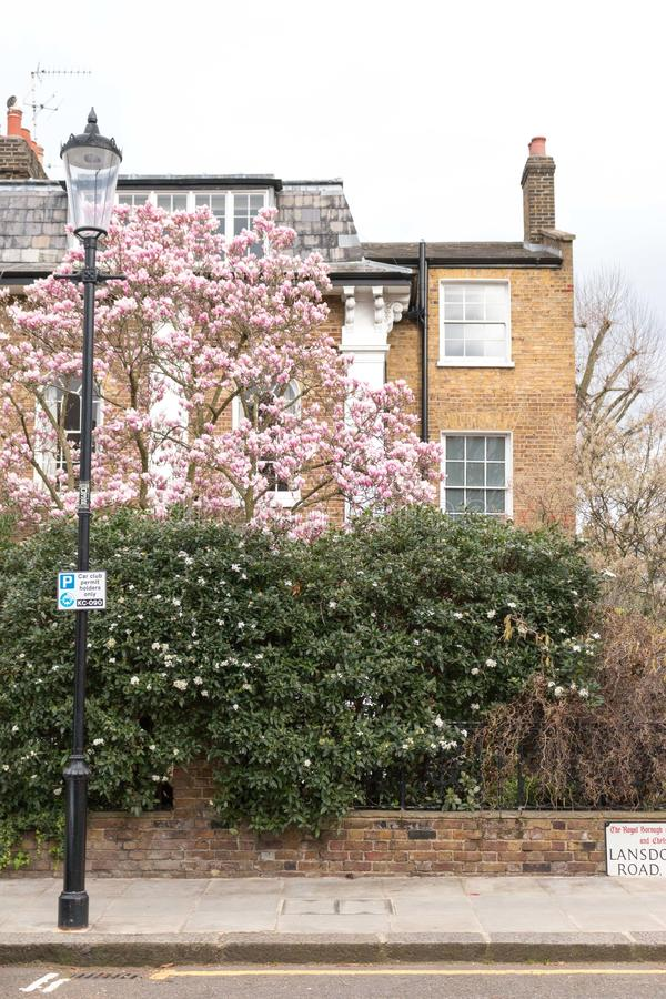 London in bloom stock photo