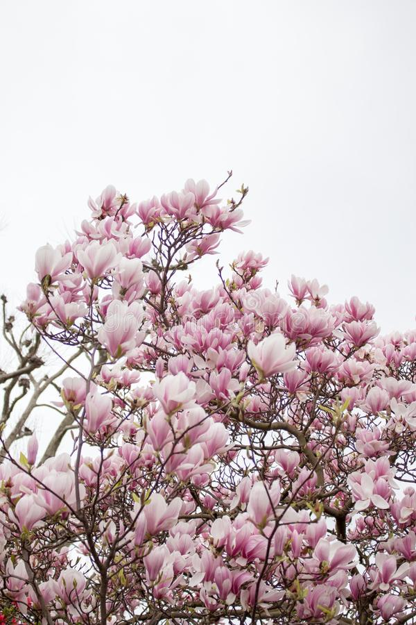 London in bloom stock photography