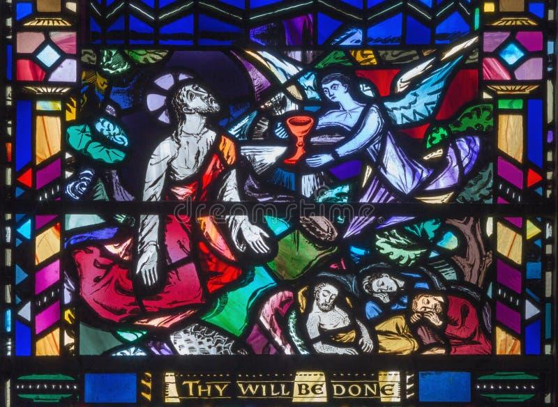 London - den Jesus bönen i Gethsemane gareden på målat glass i kyrkaSt Etheldreda royaltyfria foton