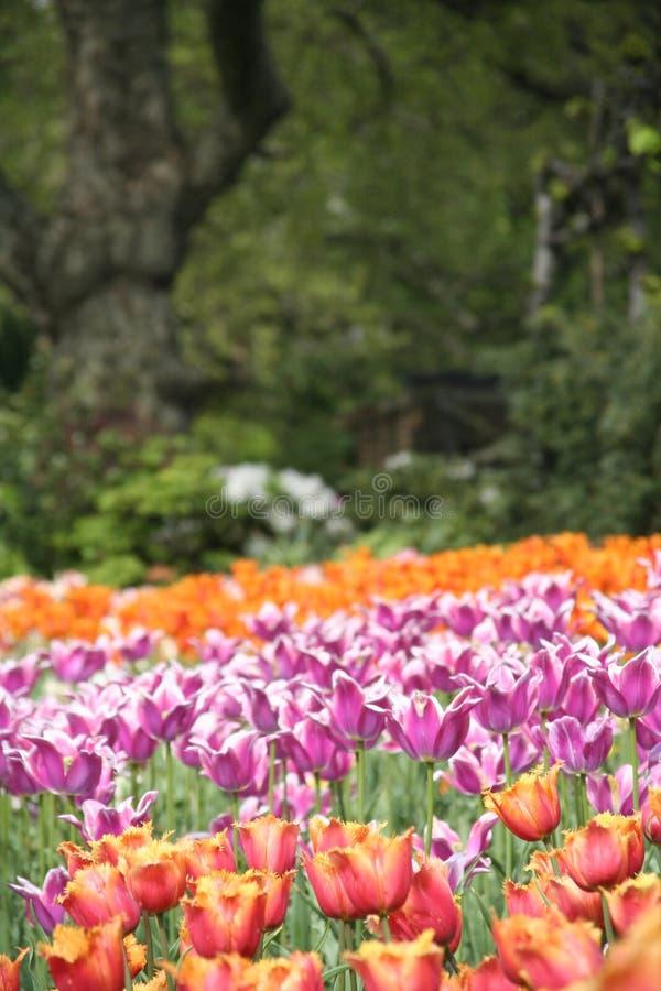 London-Frühling lizenzfreies stockfoto