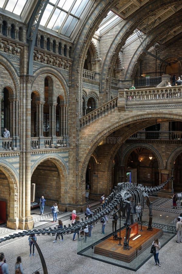 LONDON - 10. JUNI: Leute, welche die nationale Geschichte Musen erforschen lizenzfreie stockbilder