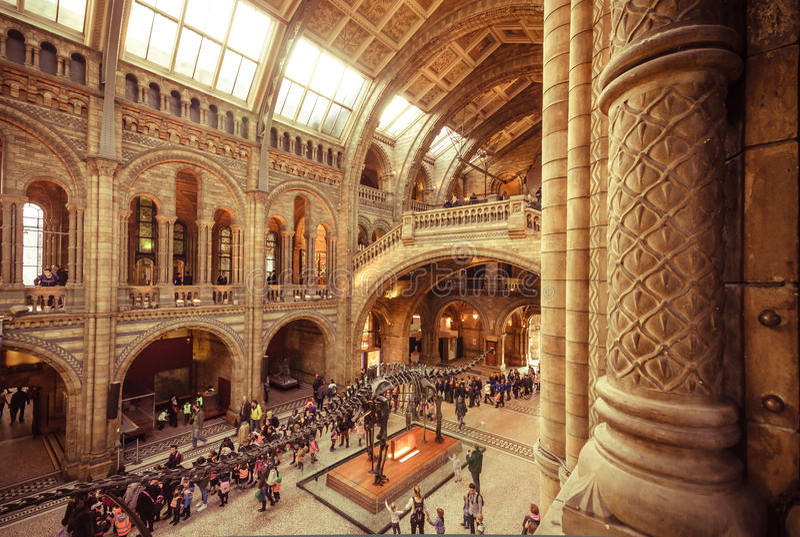 London museer - naturhistoriamuseum - Hintze Hall arkivfoton