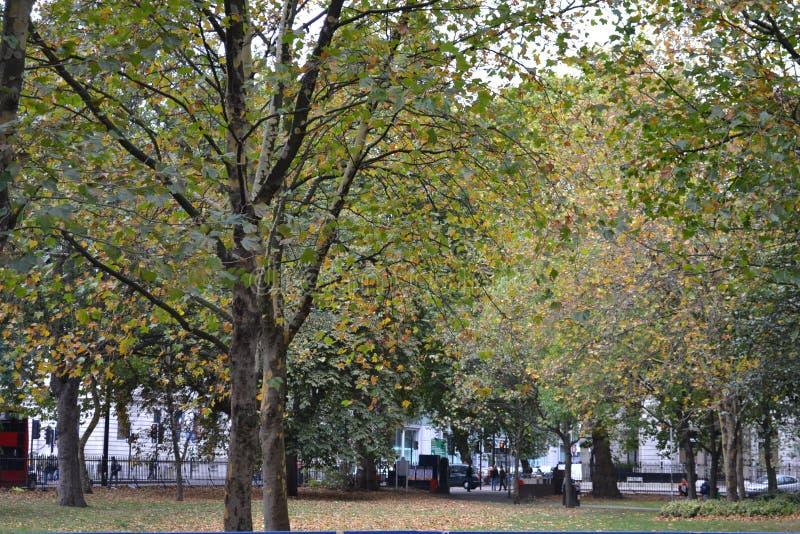 London nobla träd arkivbild
