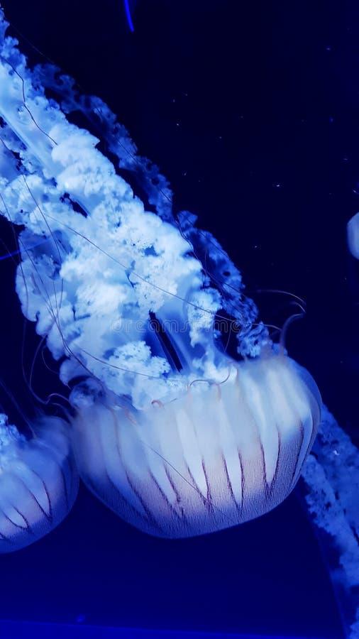 London sealife. Fish, white, whitefish, amazingfish, bluewater, fourocense, scenic, nature, natural stock photos