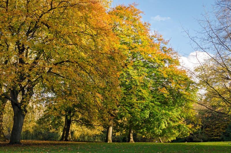 London, St. James Park (Herbst) lizenzfreie stockfotografie