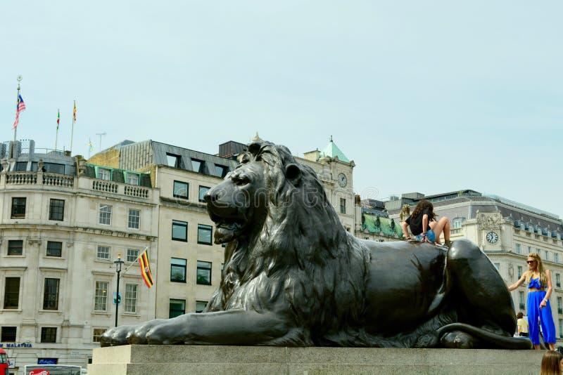 London UK, Juli 2019 Ett av de fyra berömda lejonen i Trafalgar Square, omgeende Nelsons kolonn royaltyfria bilder