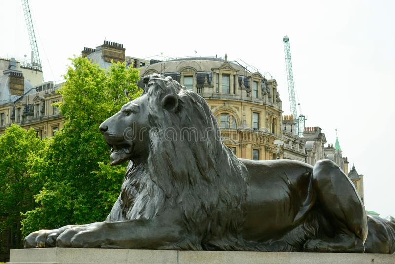 London UK, Juli 2019 Ett av de fyra berömda lejonen i Trafalgar Square, omgeende Nelsons kolonn royaltyfri bild