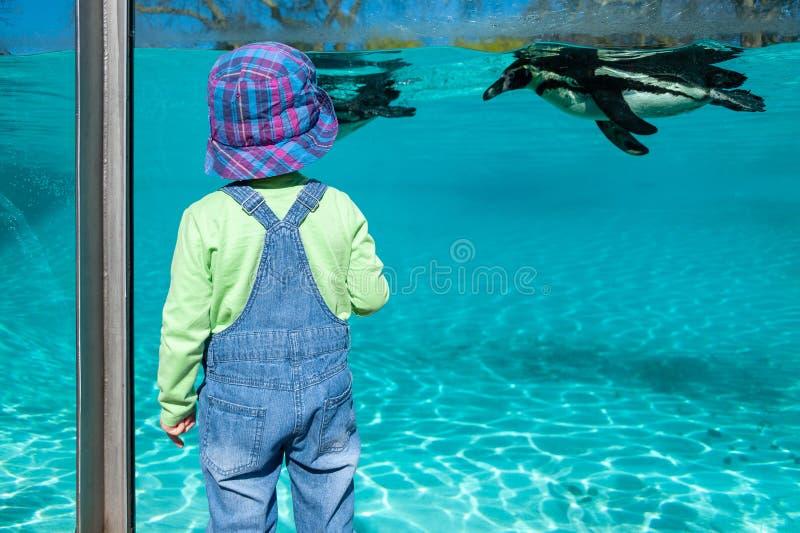 London, UK. 08-03-2019. ZSL London Zoo. Penguin Beach – England's biggest penguin pool. royalty free stock image