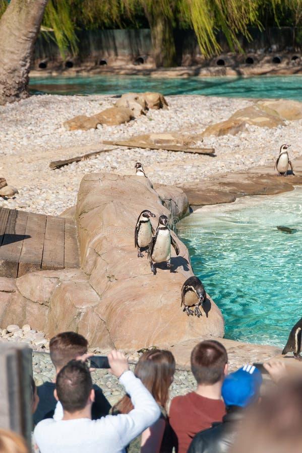London, UK. 08-03-2019. ZSL London Zoo. Penguin Beach – England's biggest penguin pool. royalty free stock photos