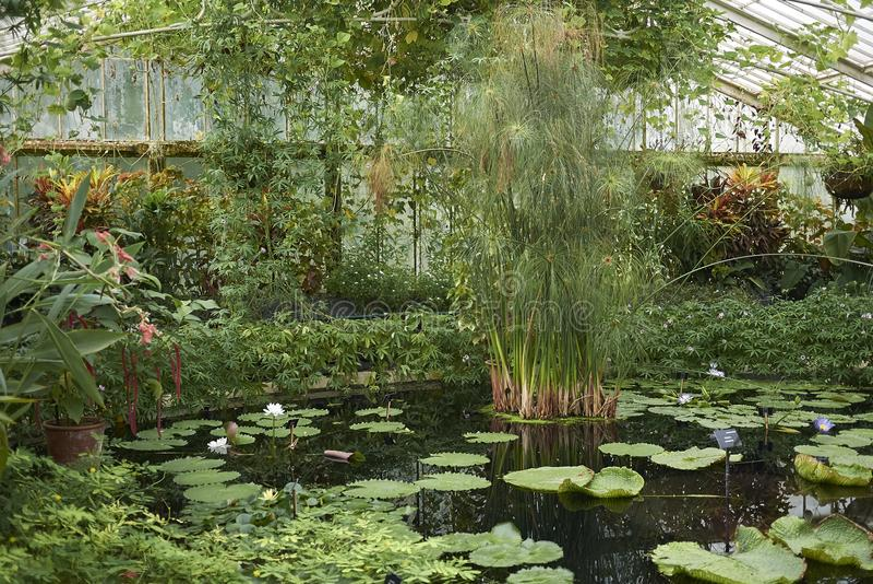 Kew Garden glasshouse stock photography