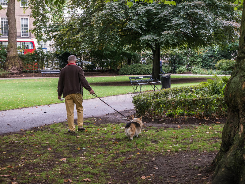 Londoner walks dog in Russell Square stock photos