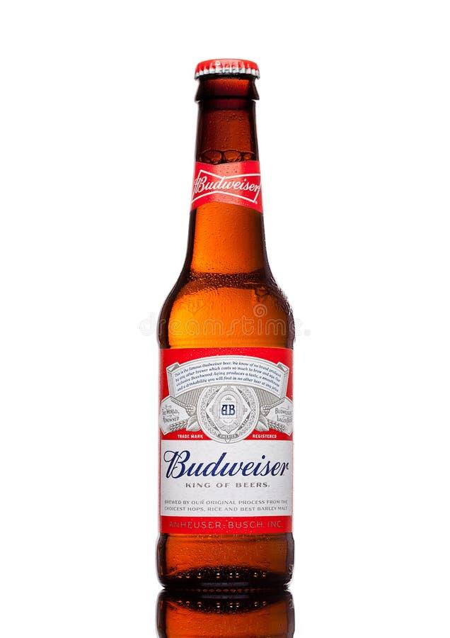 LONDRA, REGNO UNITO - 21 MARZO 2017: Bottiglia della birra di Budweiser su fondo bianco, una lager americana in primo luogo prese fotografia stock