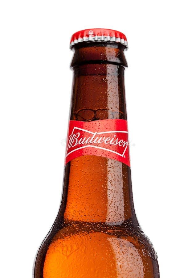 LONDRA, REGNO UNITO - 21 MARZO 2017: Bottiglia della birra di Budweiser su fondo bianco, una lager americana in primo luogo prese immagini stock libere da diritti