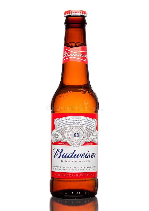 LONDRA, REGNO UNITO - 21 MARZO 2017: Bottiglia della birra di Budweiser sul fondo del whote, una lager americana in primo luogo p fotografia stock libera da diritti