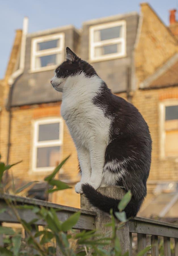 Londres, Inglaterra, el Reino Unido - un gato blanco y negro en el jardín en un día soleado fotos de archivo libres de regalías