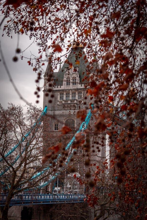 LONDRES, INGLATERRA, o 10 de dezembro de 2018: Ponte da torre em Londres, o Reino Unido Visto atrás das árvores brancas da torre  imagens de stock